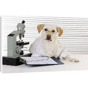 [Image: science-dog-amazon-com.jpg]